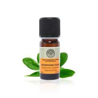 Huile essentielle de Ravintsara bio 100 % pure et naturelle est incontournable grâce à ses qualitées antivirales et anti-infectueuses