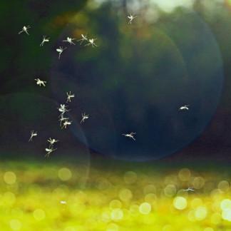 Insecticides Bio