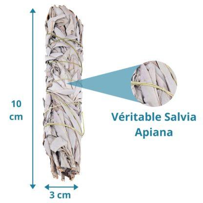 dimension de notre Bâton de Sauge blanche amérindienne (Salvia Apiana) à brûler est utilisé afin d'assainir et purifier les lieux et originaire d'Amérique du nor