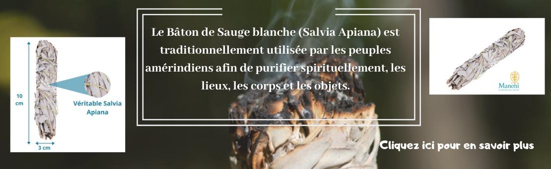 Sauge blanche Salvia Apiana à brûler pour purification et fumigation.